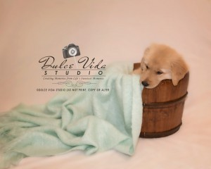 Dulce Vida Studio | Hudson Valley Pet Photographer